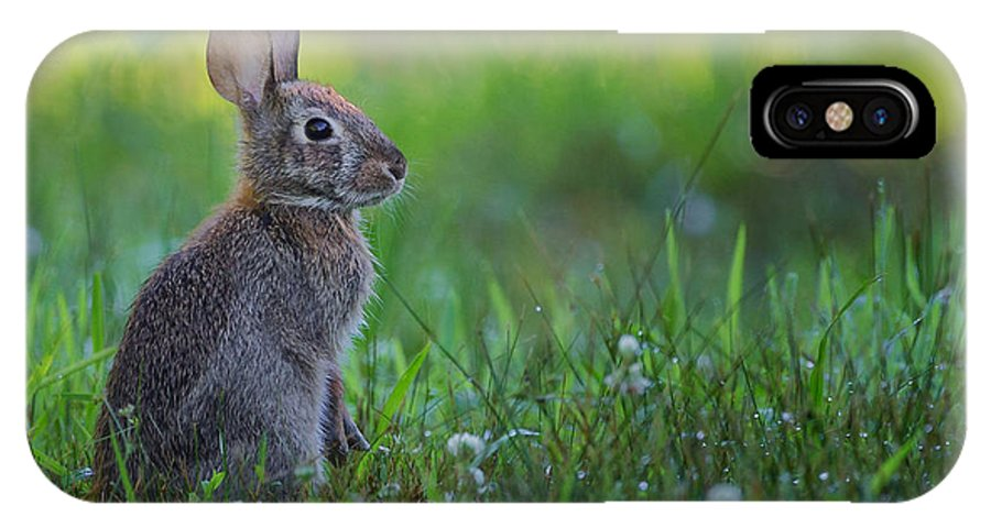 Rabbit IPhone X Case featuring the photograph The Eastern Cottontail by Bill Wakeley