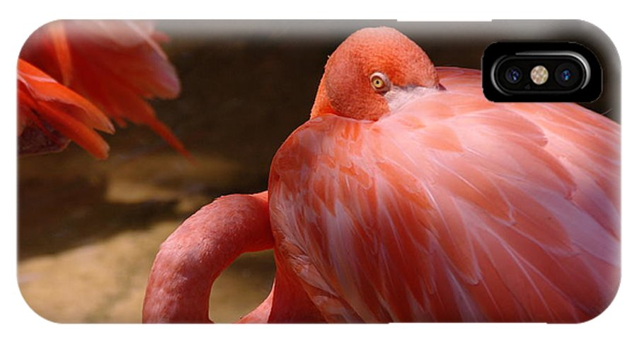 Birds. Feathers IPhone X Case featuring the photograph The Flamingo Wakens by Jeff Swan