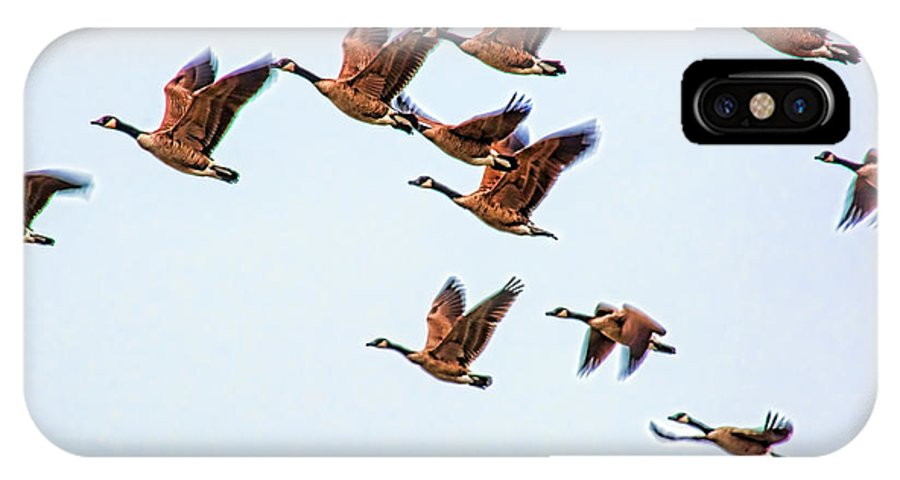 Canadian Geese IPhone X Case featuring the photograph The Flock by John Welling