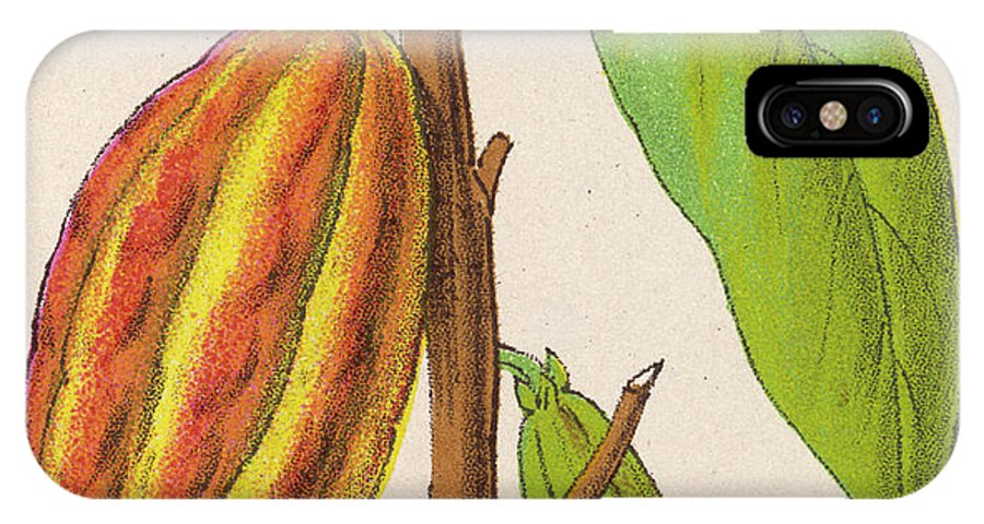 Plant IPhone X Case featuring the drawing The Fruit Of The Cocoa (or Chocolate) by Mary Evans Picture Library