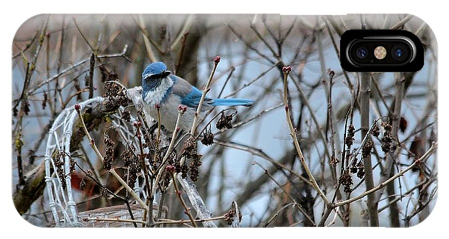 Bird IPhone X Case featuring the photograph The Gathering Blue Jay by Marjorie Imbeau
