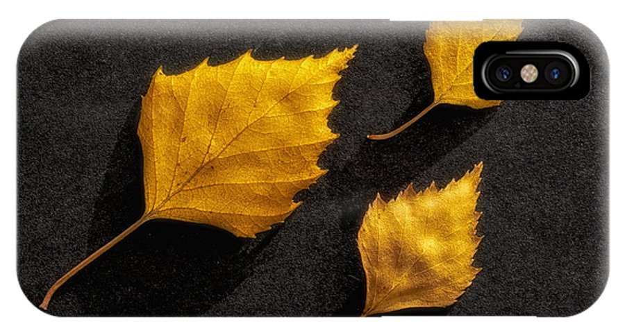 Art IPhone X Case featuring the photograph The Golden Leaves by Veikko Suikkanen