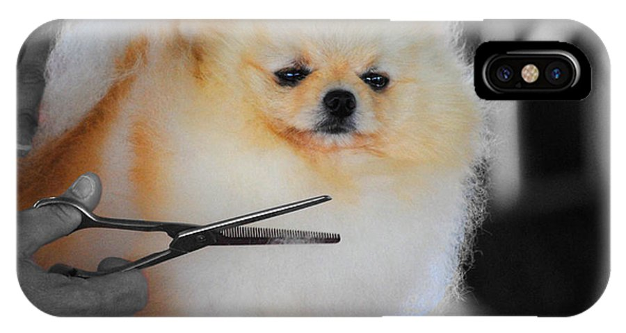 Pomeranian IPhone X Case featuring the photograph The Groomer by Jai Johnson