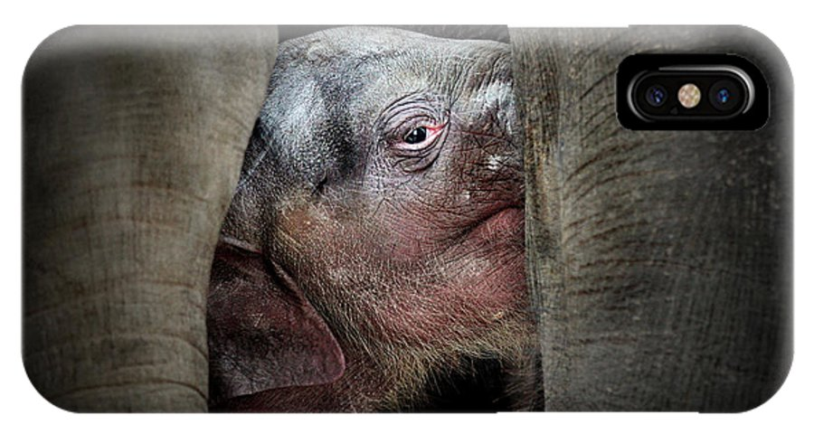 Animals IPhone X Case featuring the photograph The Immemorial Knowledge Of The Newborns by Antje Wenner-braun