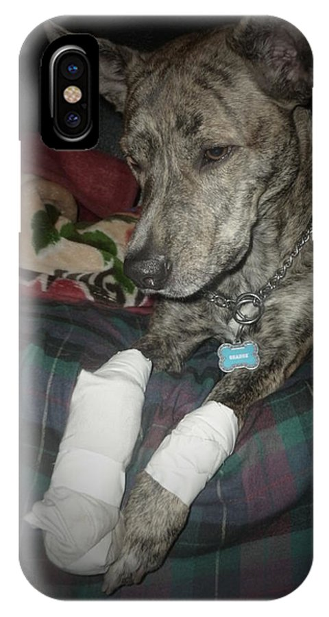 Dog IPhone X Case featuring the photograph The Injury by Montana Wilson