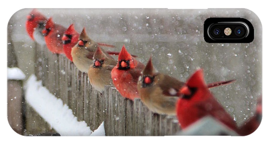 Cardinals IPhone X Case featuring the photograph The Jury Is Out by Carol Estes