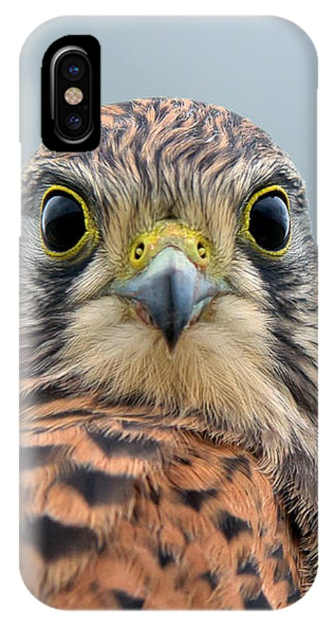 Kestrel IPhone X Case featuring the photograph The Kestrel Face To Face by Torbjorn Swenelius