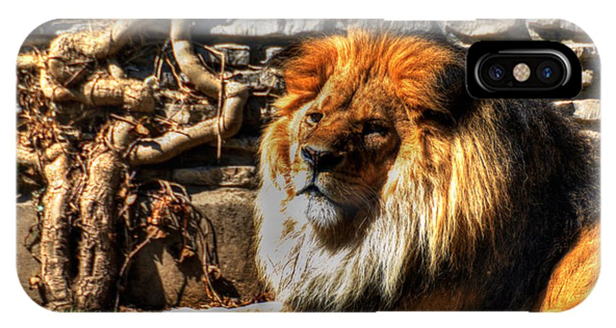Lion IPhone X Case featuring the photograph The King Lazy Boy At The Buffalo Zoo by Michael Frank Jr