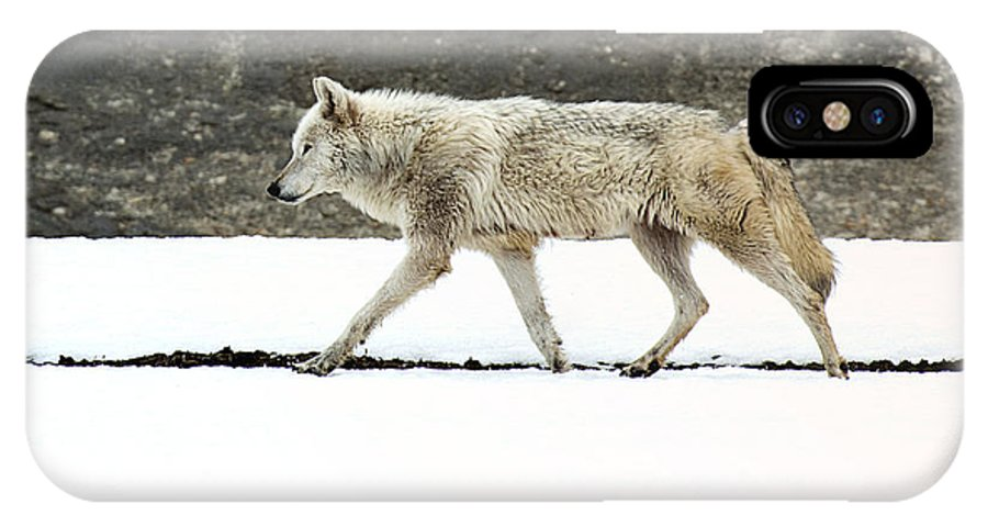 Wolf IPhone X Case featuring the photograph The Lady Of Canyon by Deby Dixon