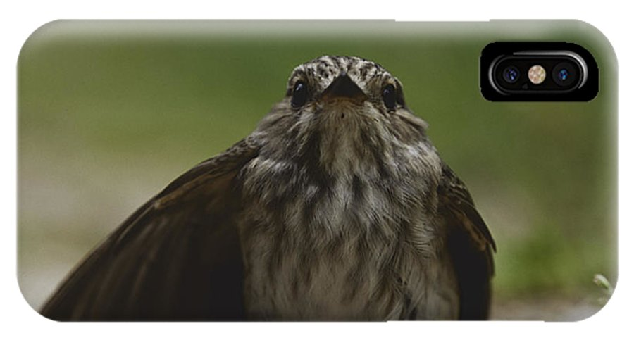 Animal IPhone X Case featuring the photograph The Little Bird by Patrick Kessler