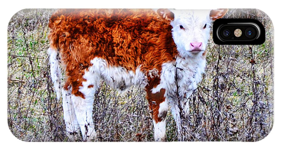 The Little Cow IPhone X Case featuring the photograph The Little Cow by Bill Cannon