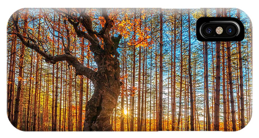 Belintash IPhone X Case featuring the photograph The Lord Of The Trees by Evgeni Dinev
