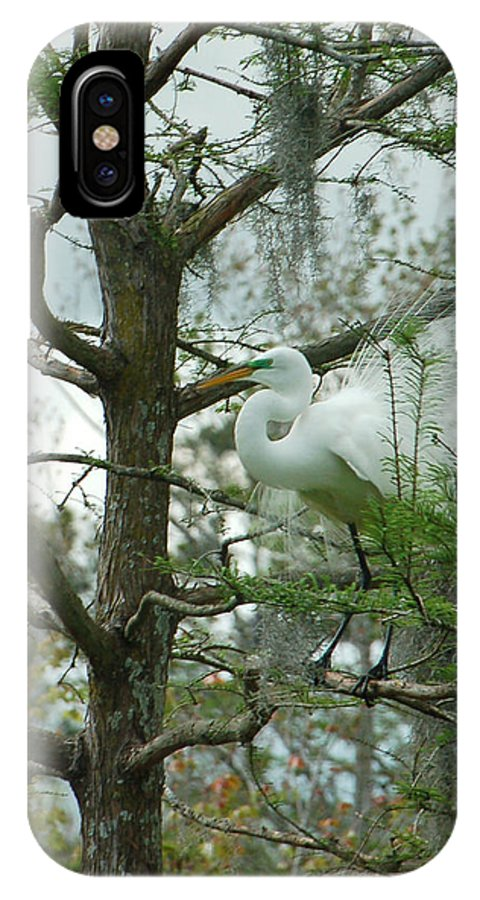Egret IPhone X Case featuring the photograph The Mating Dance by Suzanne Gaff
