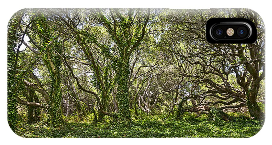 Los Osos Oak State Natural Reserve IPhone X Case featuring the photograph The Mysterious Forest - The Magical Trees Of The Los Osos Oak Reserve. by Jamie Pham