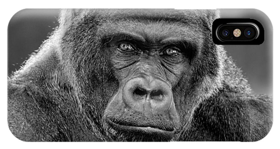 Gorilla IPhone X Case featuring the photograph The Patriarch by Michael Pachis