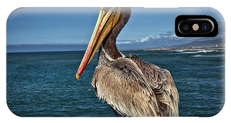 Carlsbad IPhone X Case featuring the photograph The Pelican Of Oceanside Pier by Diana Powell