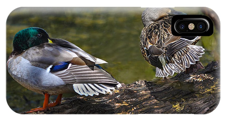 Mallard IPhone X Case featuring the photograph The Perfect Mallard Couple by Sandi OReilly