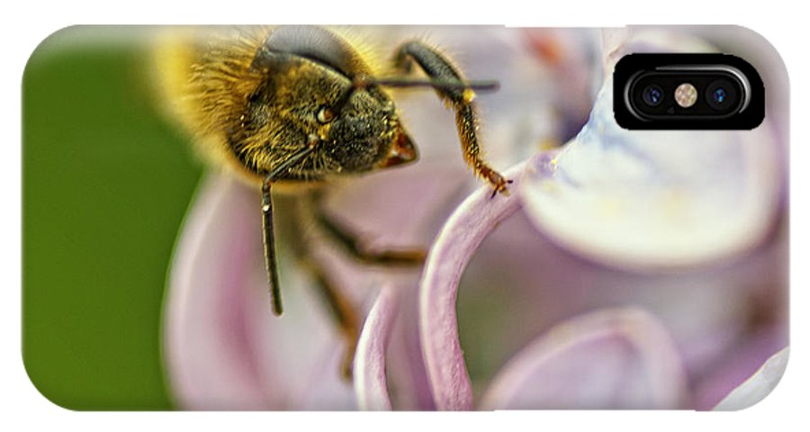 Bee IPhone X Case featuring the photograph The Pollinator by Susan Capuano