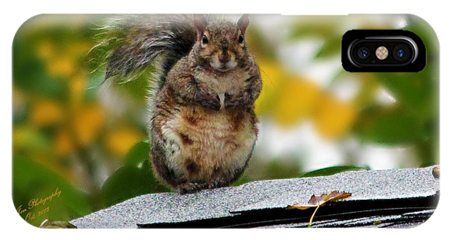 Squirrel IPhone X Case featuring the photograph The Poser by Jeanette C Landstrom