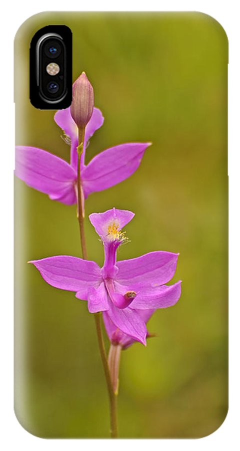Grass Pink IPhone X Case featuring the photograph The Prettiest Pink by Joshua McCullough