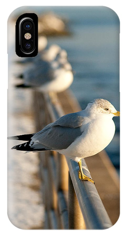 Gull IPhone X Case featuring the photograph The Ring-billed Gull by Kristia Adams