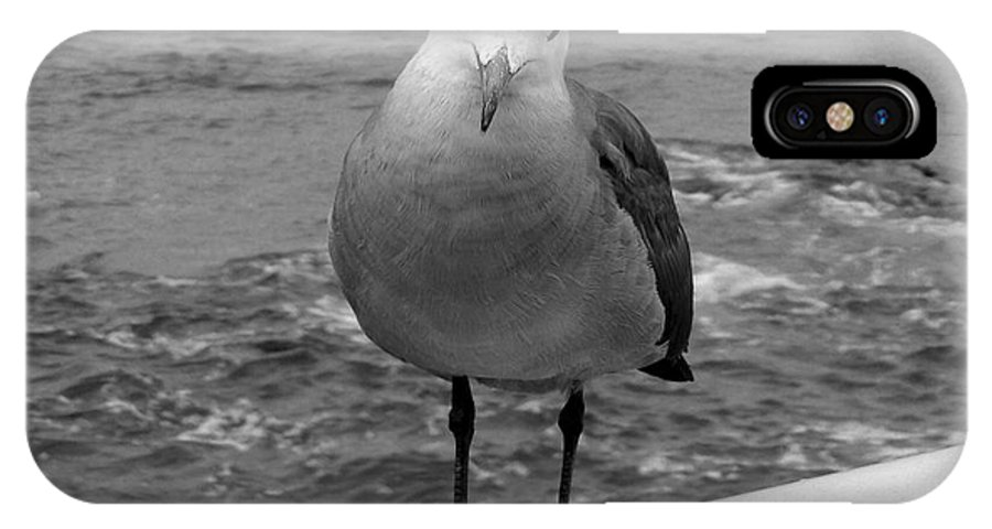 Water Foul IPhone X Case featuring the photograph The Seagull by Richard J Cassato
