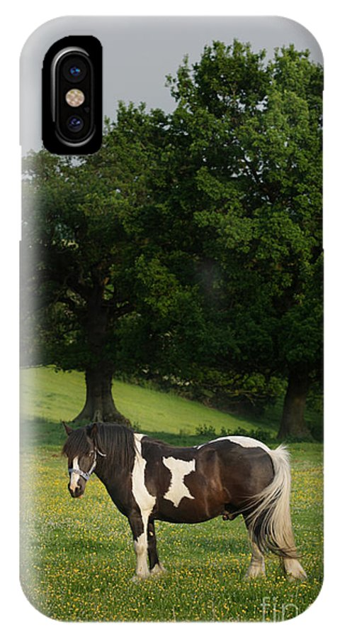 Horse IPhone X Case featuring the photograph The Sunny Meadow by Angel Ciesniarska