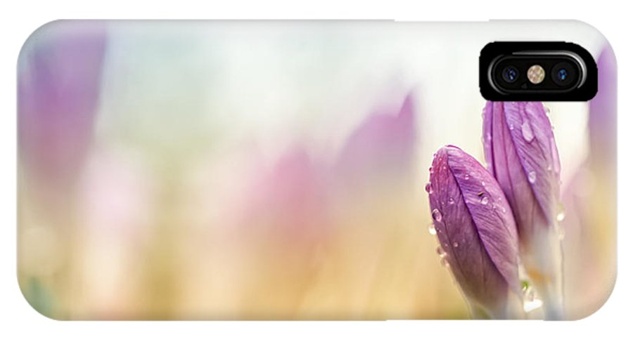 Crocus IPhone X Case featuring the photograph The Two Of Us Together.... by Bob Daalder