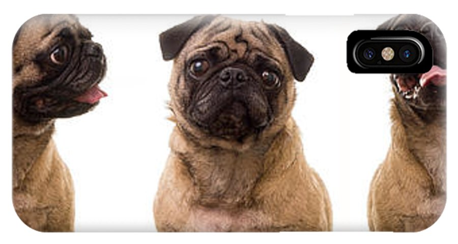 Pug IPhone X Case featuring the photograph The Usual Suspects by Edward Fielding