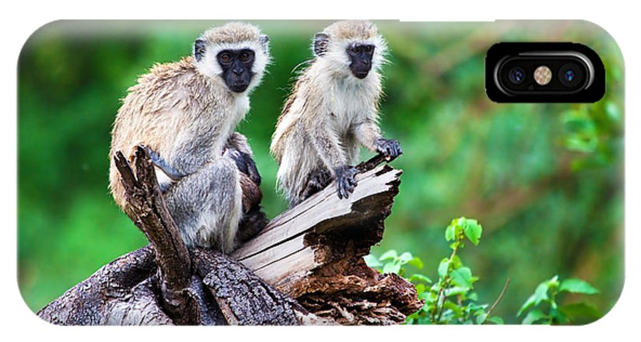 Vervet IPhone X Case featuring the photograph The Vervet Monkey. Lake Manyara. Tanzania. Africa by Michal Bednarek