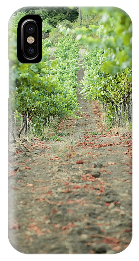 Santa Rosa IPhone X Case featuring the photograph The Vines by Ariane Moshayedi