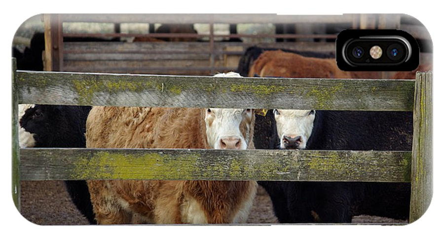 Cow IPhone X Case featuring the photograph The Watchers by Cindy Johnston