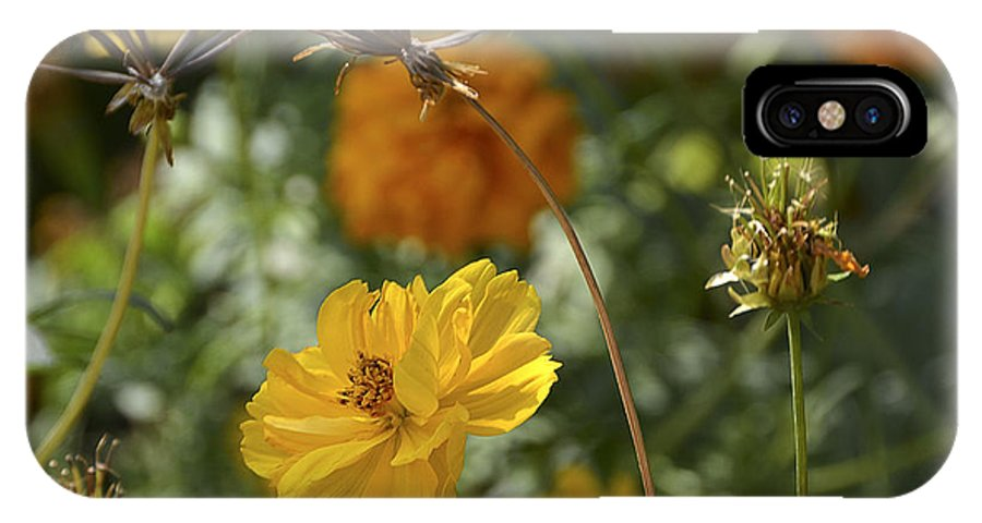 Wildflowers IPhone X Case featuring the photograph The Weed Series Number 123 by Ted Guhl
