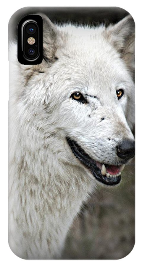 Wild Animals Wolves. Wild And In The Zoo. IPhone X Case featuring the photograph The Wolf. by Valerie Stein