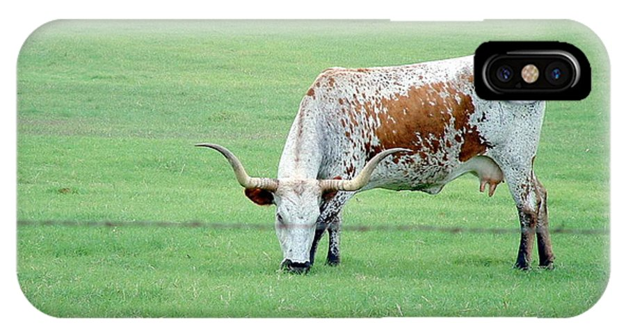 Animals IPhone X Case featuring the photograph This Cow Is No Bull by Darrell Clakley
