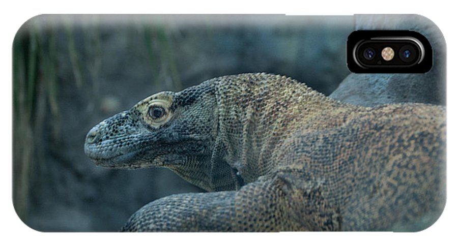Lizard IPhone X Case featuring the photograph This Is My Bestside 2 by Rich Priest