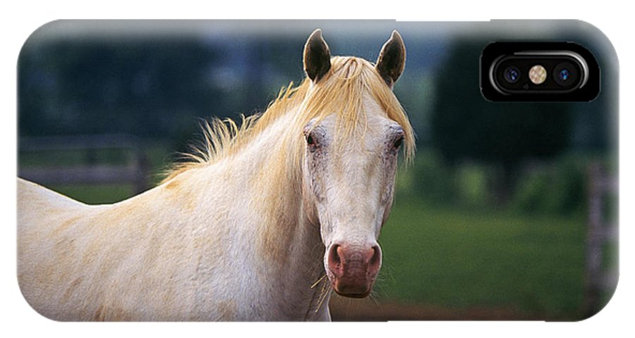 Horse IPhone X / XS Case featuring the photograph Thoroughbred Mare by Buddy Mays