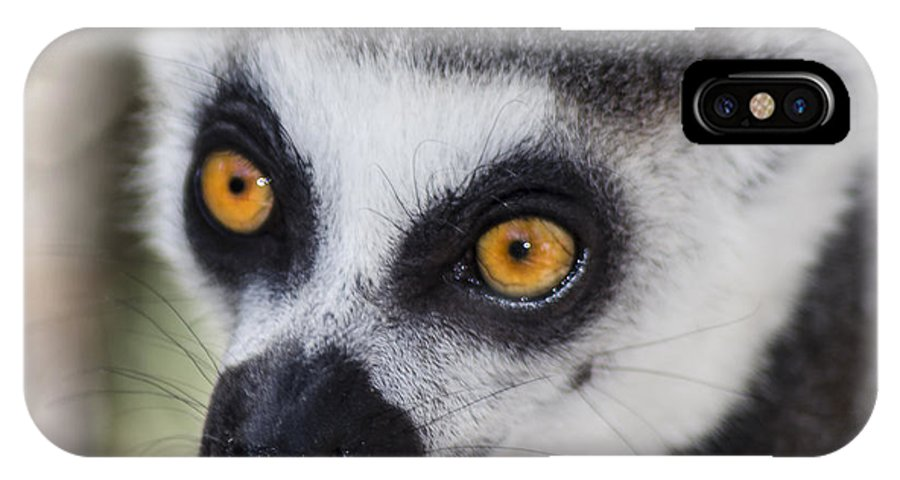 Lemur IPhone X Case featuring the photograph Those Eyes by Camille Lopez