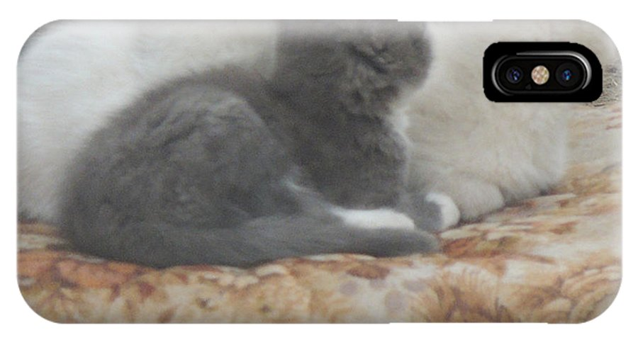 Kittens IPhone X Case featuring the photograph Three Amigos by Natasha Anderson