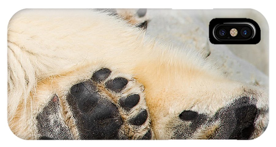 Bear IPhone X Case featuring the photograph Three Bear Paws by Les Palenik