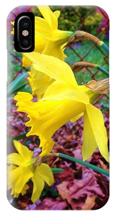 Daffodil IPhone X Case featuring the photograph Three Daffodils by Anna Willard