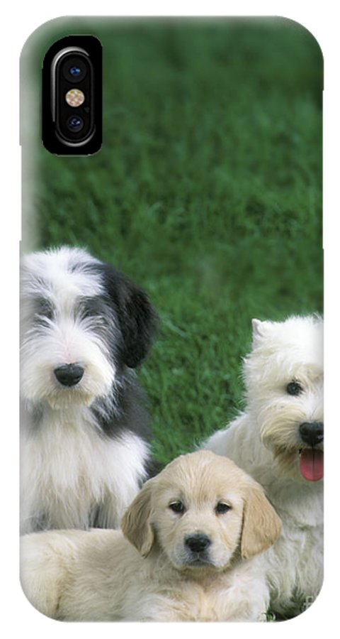 Dogs IPhone X / XS Case featuring the photograph Three Diffferent Puppies by Jean-Michel Labat