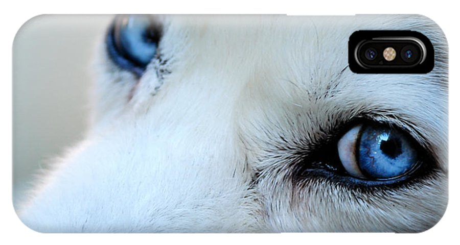 Husky IPhone X Case featuring the photograph Through The Eyes Of Love by Kristina Austin Scarcelli