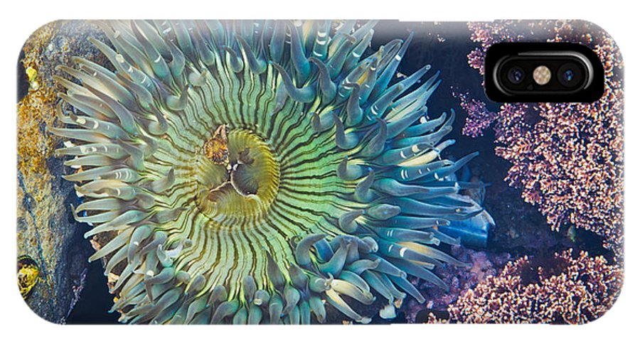 Seascape IPhone X / XS Case featuring the photograph Tide Pool Sea Anemone by Tuan Le