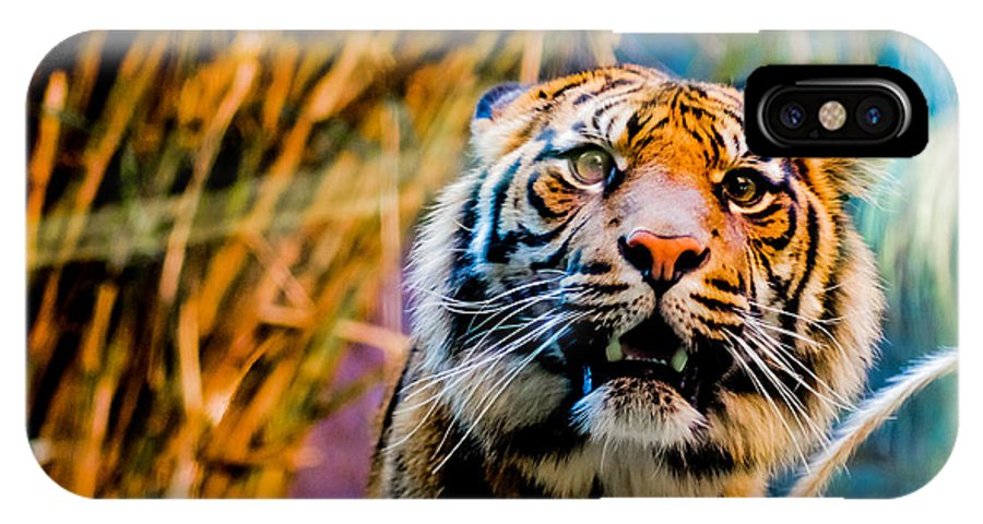 Tiger IPhone X Case featuring the photograph Tiger by Corey Mendez