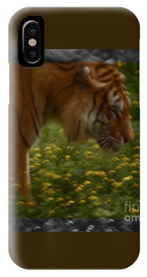 Tiger IPhone X / XS Case featuring the photograph Tiger In The Midst Of Buttercups by Daniele Auvray