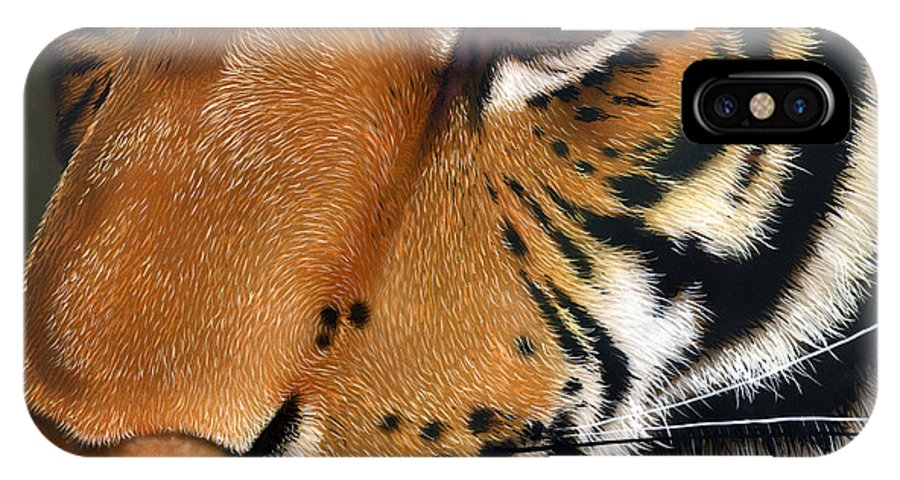 Tiger IPhone X Case featuring the painting Tiger by Jurek Zamoyski