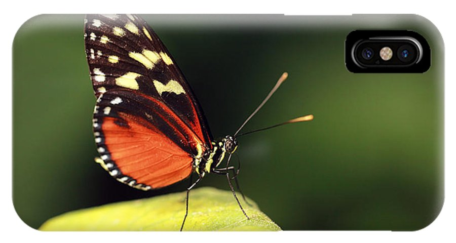 Butterfly IPhone X Case featuring the photograph Tiger Longwing by Grant Glendinning