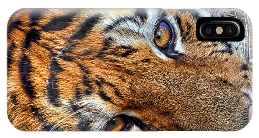 Tiger Eyes IPhone X Case featuring the photograph Tiger Peepers by Thomas Woolworth