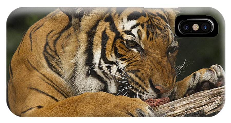 Tiger IPhone X Case featuring the photograph Tiger3 by Marty Maynard